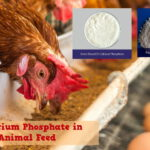 Use of Dicalcium Phosphate in Animal Feed