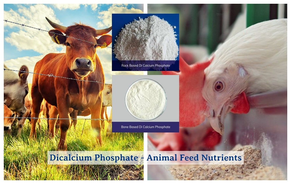 Dicalcium Phosphate - Animal Feed Nutrients