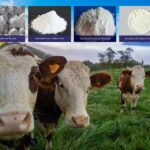 Why Are Feed Supplements Important